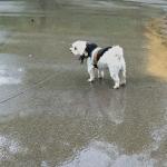 Yogi in the rain